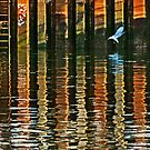 A seagull by cclaude