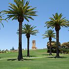 Canary Island Palm Trees by Jane McDougall