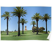 Canary Island Palm Trees Poster