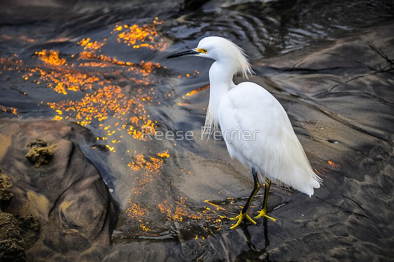 White crane bird - photo#27