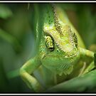 chameleon by NordicBlackbird