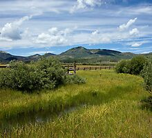 Steamboat Lake Mountain Meadow by Michael Kirsh