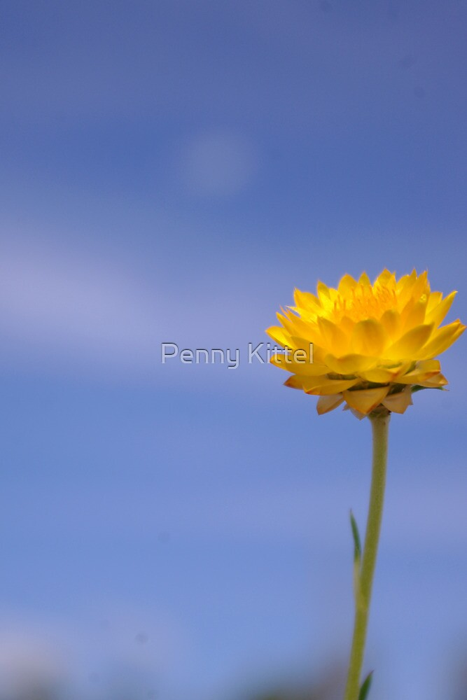 Everlasting Happiness  by Penny Kittel