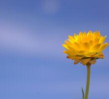 Everlasting Happiness  by kurrawinya