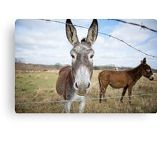Humble Little Burro Canvas Print
