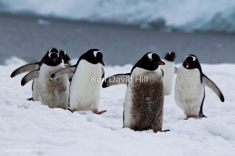 Penguin 006 by Karl David Hill