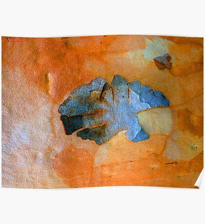 Bark Abstract # 16 Poster