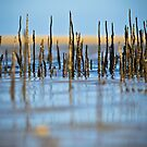 Sticks by Donna Rondeau