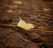 The Fallen by Nicola Smith