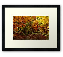 Drive Through the Colors Framed Print
