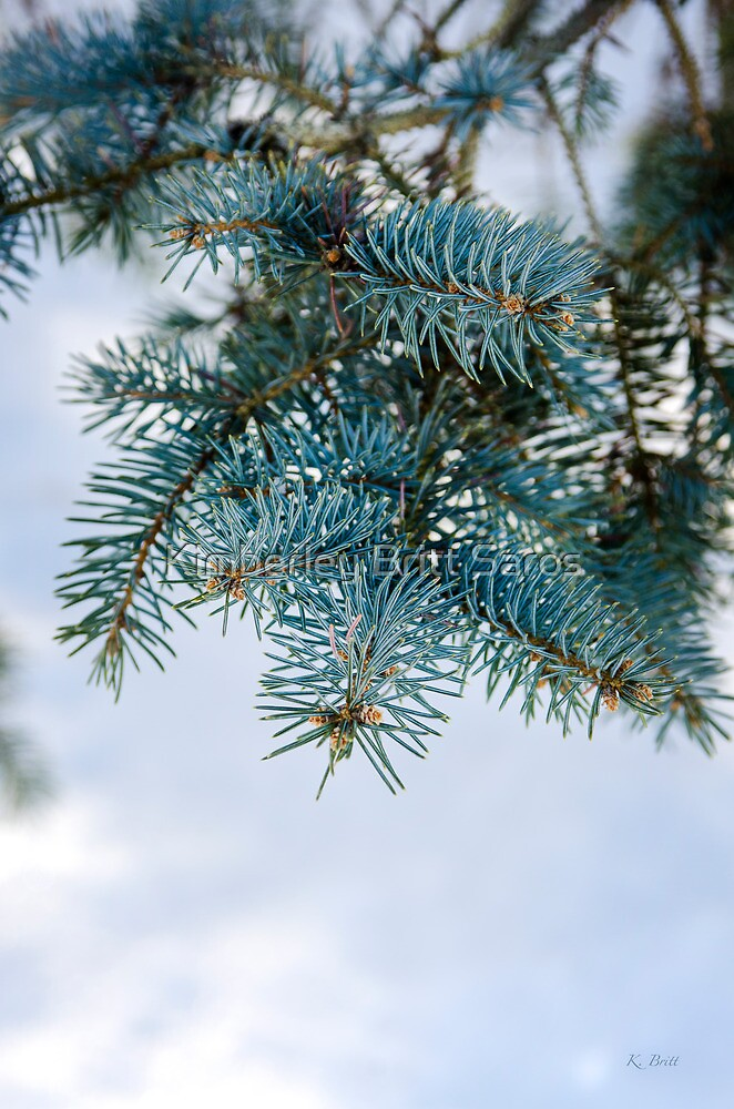Blue Spruce by KBritt
