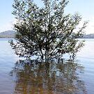 Flood tree by Timothy John Keegan