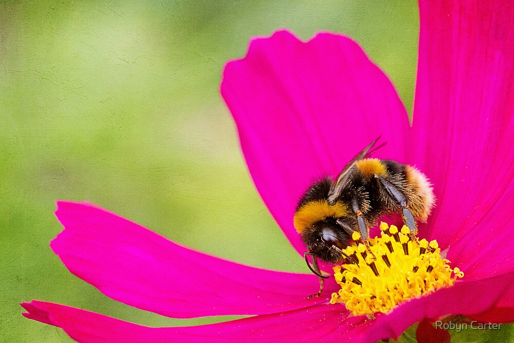 Collecting Pollen by Robyn Carter