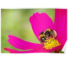 Collecting Pollen Poster