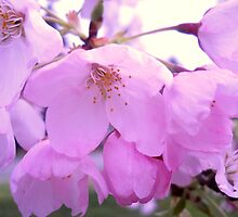 Pretty Pink Flowers by sarahd93