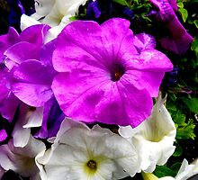 Purple and White Flowers by sarahd93