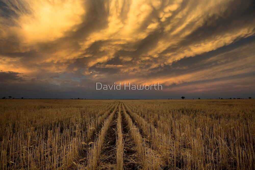 Bakers delight by David Haworth