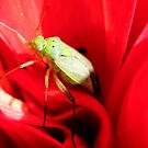 Handsome bug.. by Elaine Game
