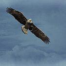 Eagle In The Clouds by Deborah  Benoit