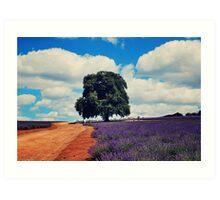 Bridestowe Lavender Farm Art Print