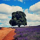 Bridestowe Lavender Farm by oddoutlet