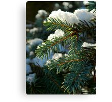 The first snow of winter Canvas Print