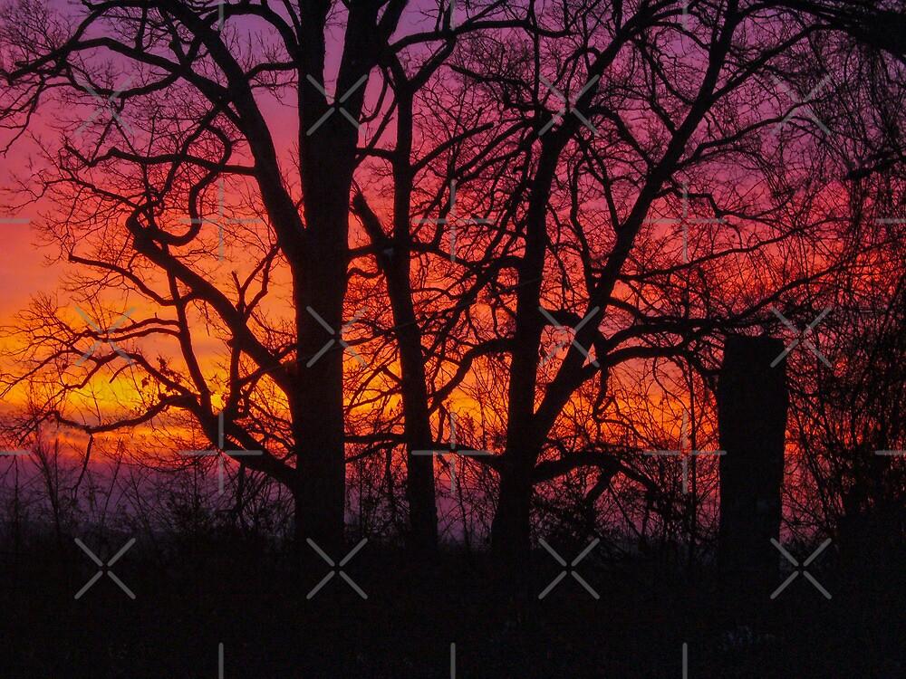 Sunrise by Susan S. Kline