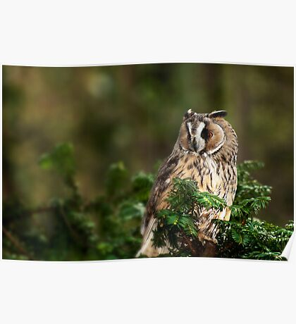 Owl in the tree Poster