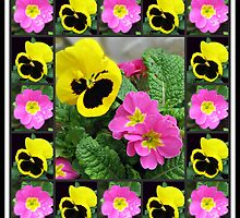 Brave Little Soldiers - Winter Pansies and Primroses by BlueMoonRose