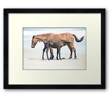 Outer Banks Mother and Foal Framed Print