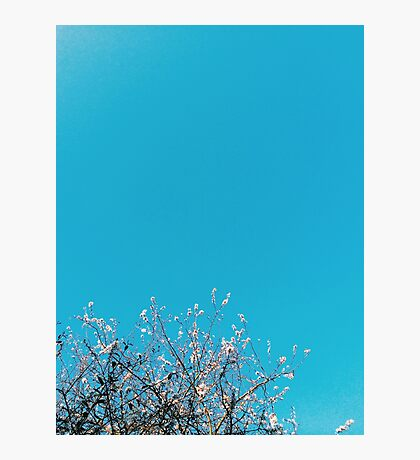 Turquoise Sky and Pink Blossom Photographic Print