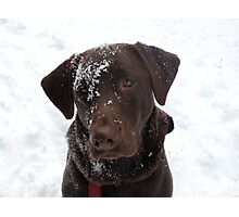 Frosty Lab Photographic Print