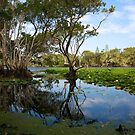 lake ainsworth tree reflection by GrowingWild