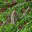 A monkey watching boats from shore by JenniferLouise