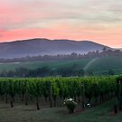 Dawn at Killara Estate by Daniel Berends