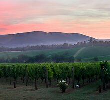 Dawn at Killara Estate by Daniel Berends