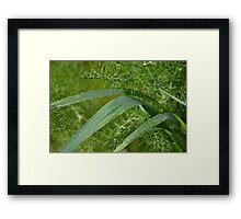 The feathered greenery of wild Fennel Framed Print