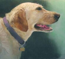 My yellow lab by Howard Scherer