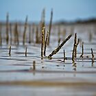 Sticks II by Donna Rondeau