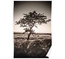 Brown Sunsetting Tree Poster