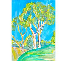 East Bluff Eucalyptus Photographic Print