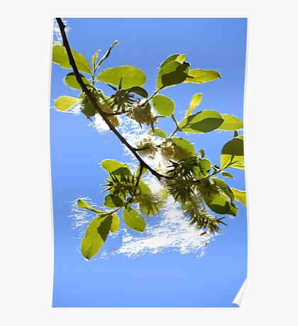 Catkins! Poster
