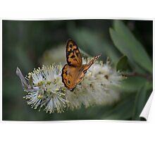 Common Brown Butterfly on Bottlebrush Poster