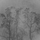 Trees in a snow storm by AndreCosto