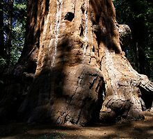 Sequoia Big Foot by Michael Kirsh