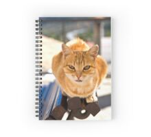 Ginger Tom Spiral Notebook