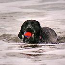 Red ball, Black dog..........!  by Roy  Massicks