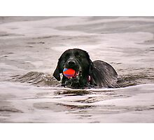 Red ball, Black dog..........!  Photographic Print
