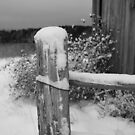 Winter Post by Steve Small