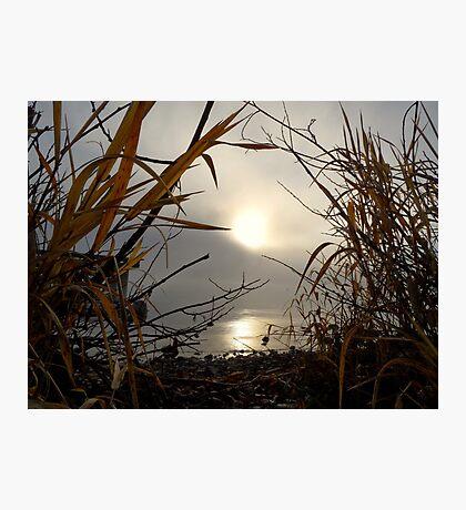Splendor Photographic Print